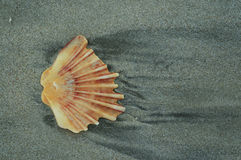 Shell in sand Royalty Free Stock Photo