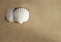 Shell sand romantic Royalty Free Stock Photos