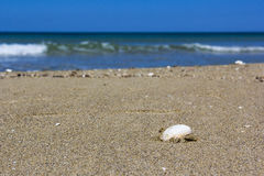 Shell on sand. Salento, shell on the sandy beach Stock Images