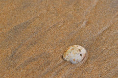 Shell in sand. On a seashore Royalty Free Stock Images