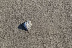 The Shell on the Sand. The shells are on the sand of the sea`s edge Royalty Free Stock Photography