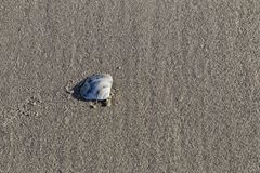 The Shell on the Sand. The shells are on the sand of the sea`s edge Royalty Free Stock Image
