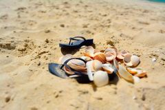 Shell on sand and summer time. Sea shell on the sand pile at the beach stock images