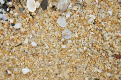 Shell and sand. Varoius sand and shell on the beach Stock Photo