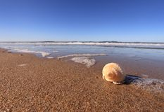 Shell on sandy beach. Shell on a sandy beach with sea in the background Stock Photos