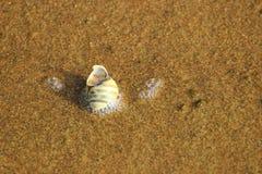 Shell-Schnecke in den Blasen auf dem Sand Stockfotos