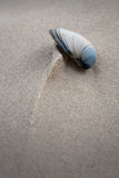 Shell and sculpted sand Stock Photography
