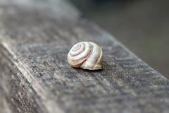 Shell se reposant sur le tronçon en bois à la forêt en été Belle coquille brune au bois de l'Israël sur la surface de photos libres de droits