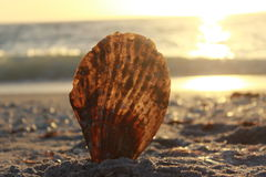 Shell se tenant droit sur la plage au coucher du soleil image libre de droits