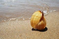 Shell se trouvant sur le sable par la mer photo libre de droits