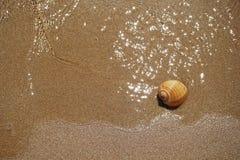 Shell se trouvant sur le sable par la mer photos libres de droits