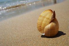 Shell se trouvant sur le sable par la mer images libres de droits