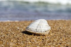 Shell By The Sea Imagens de Stock Royalty Free