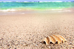 Shell and sea Royalty Free Stock Photography