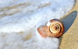 Shell in the sea Stock Image
