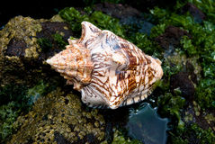 Shell Sea Royalty Free Stock Images