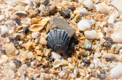 Shell. On the sea beach Stock Images