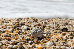 Shell. On the sea beach Royalty Free Stock Images