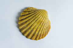 A shell from the sea. Beautiful sea shell from the ocean Stock Photography