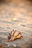 Shell on sea sand Stock Image