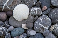 Shell on the sea shingle shore, closeup Royalty Free Stock Image