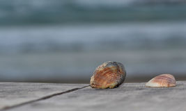 Shell. On the sea shore Stock Image