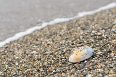 Shell on sea shore Royalty Free Stock Photo