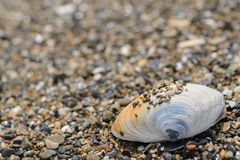 Shell on sea shore Stock Image