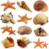 Shell And Sea Snail Set Stock Photo
