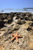 Shell Sea Star Royalty Free Stock Photos