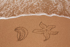 Shell and sea star drawn in the sand Royalty Free Stock Photos