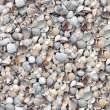 Shell seamless background. Stock Images