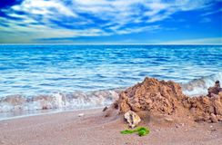 Shell on seashore Royalty Free Stock Images