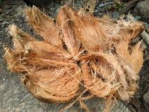 Shell seco do cocpnut Imagens de Stock