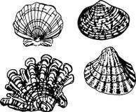 Shell set. Vector illustration Stock Photography