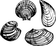 Shell set. Vector illustration Stock Photo
