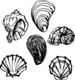 Shell set. Vector illustration Stock Images