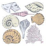 Shell set Royalty Free Stock Images