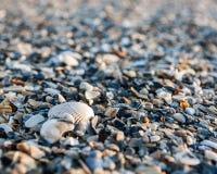 Shell setzen auf den Strand Stockbild