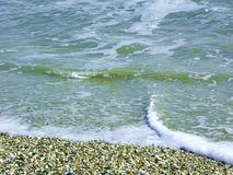 Shell setzen auf den Strand Stockfoto