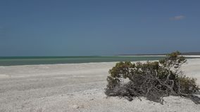 Shell setzen im Haifisch-Bucht-Nationalpark, West-Australien auf den Strand stock video