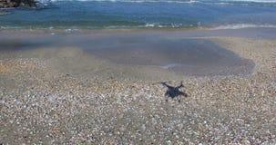 Shell setzen in Pomorie, Bulgarien auf den Strand stock video footage