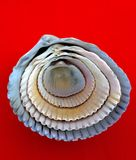 Shell in shell Stock Afbeelding