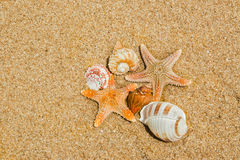 Shell or shellfish on the beach.  Royalty Free Stock Photos