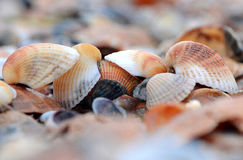 Shell. S on the shore of the Black sea Stock Images