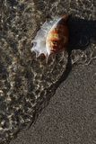 Shell on the shore Royalty Free Stock Image