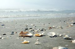 Shell Shore Stock Photography