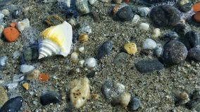 A shell in the shoreline near the sea Royalty Free Stock Image