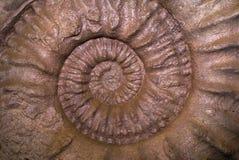 Shell skamieliny wzór zdjęcia stock