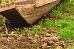 Shell-slak op de droge grond Royalty-vrije Stock Afbeelding